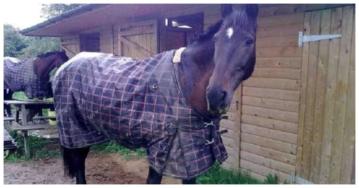 """horse 1.jpg?resize=412,232 - Horse Dies Horribly After A Night Being Scared Of Fireworks Caused It To Suffer From """"Twisted Gut"""""""