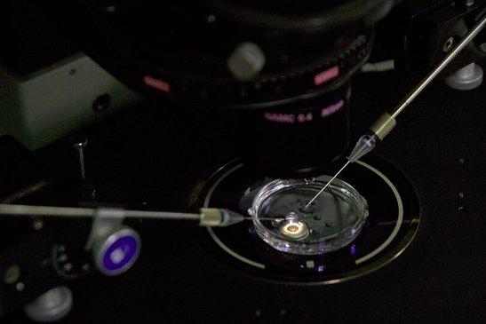 img 5bfc33b58dae6.png?resize=412,232 - Un chercheur chinois annonce avoir mis au monde deux jumelles génétiquement modifiées.