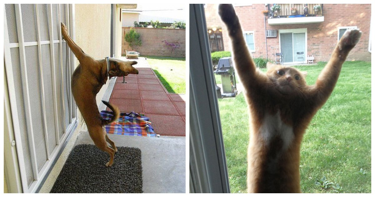 in1.jpg?resize=574,582 - 35+ Hilarious Photos Of Pets That Want To Go Inside Right Now