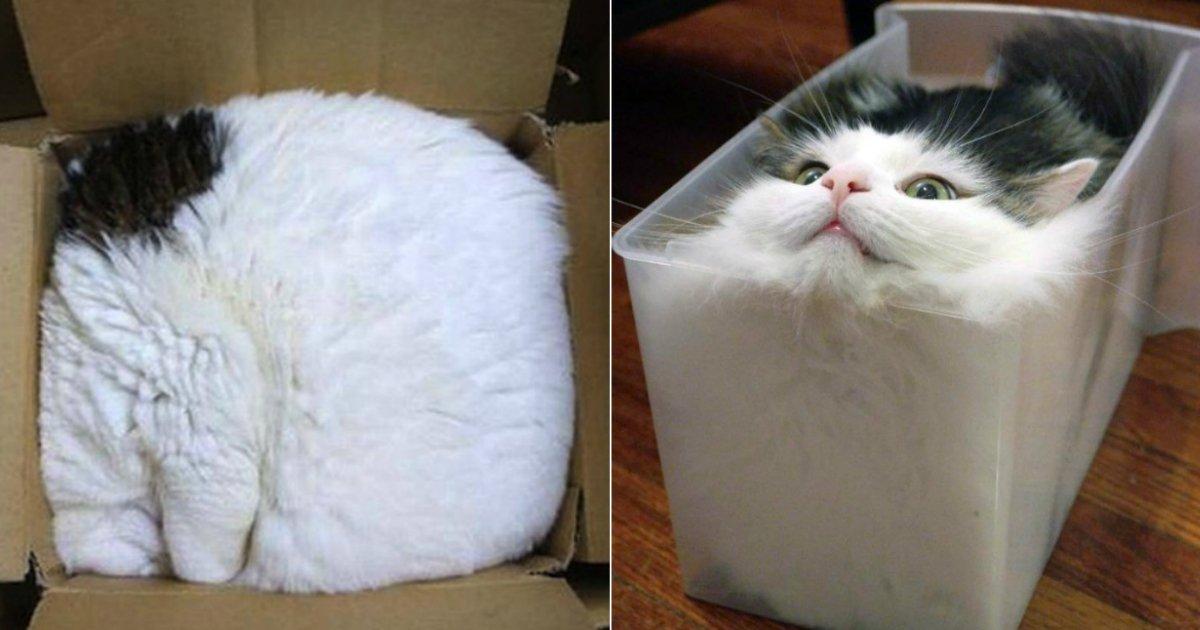 liquid cats.jpg?resize=412,232 - 15 Photos That Prove Cats Are Liquid