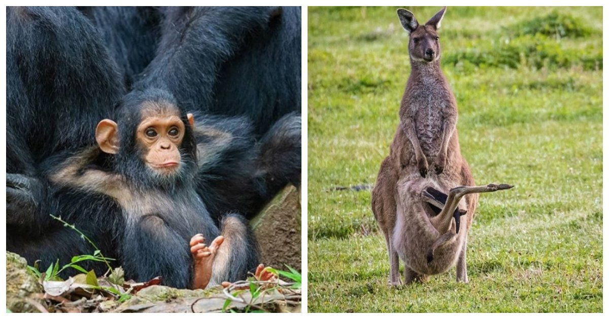 moms1.jpg?resize=1200,630 - 21 Cute Times Animal Moms Totally Nailed Parenting