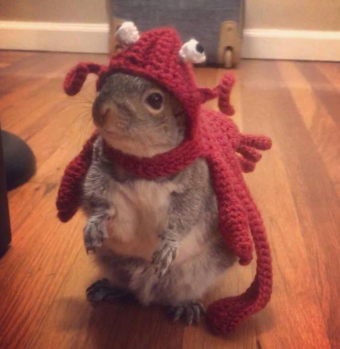 homme grandissant un bébé écureuil