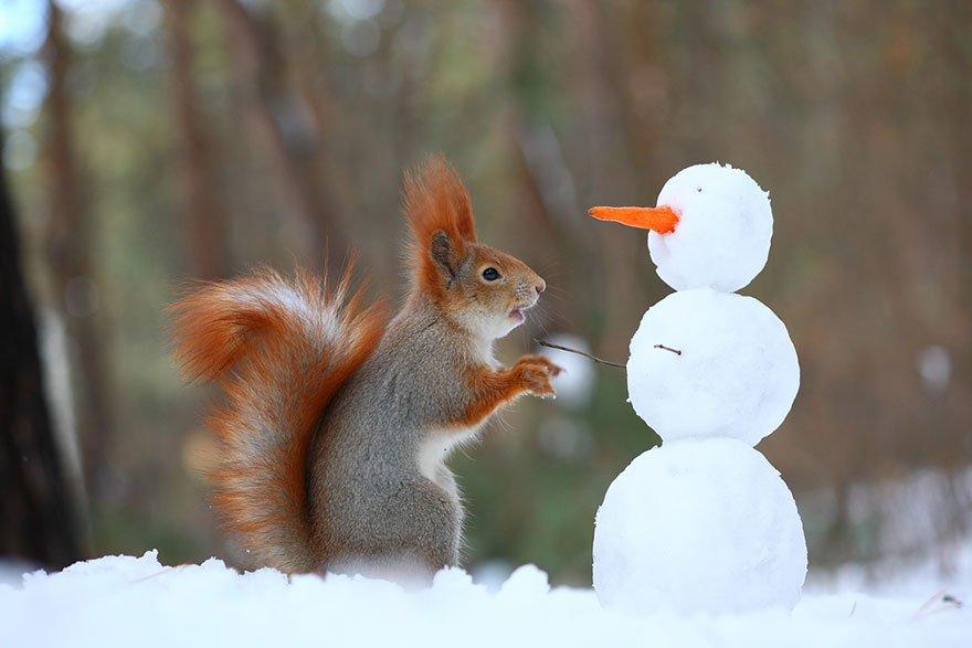 photo ecureuil trunov 09.jpg?resize=412,232 - Ces écureuils jouant dans la neige vont vous faire rire