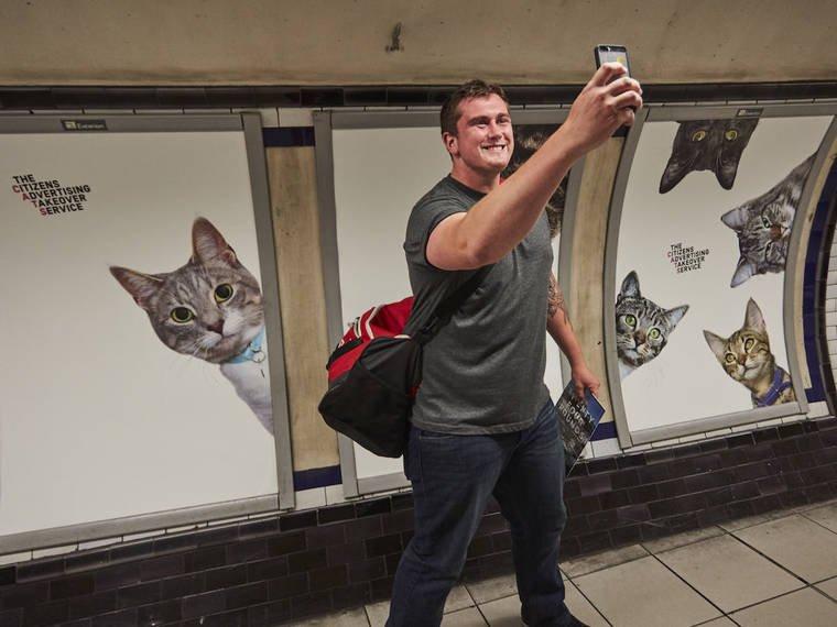 photos chats metro 9.jpg?resize=1200,630 - [Photos] Quand les chats envahissent le métro londonien.