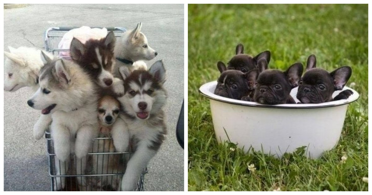 puppies 1.jpg?resize=1200,630 - 18 Of The Most Adorable Puppy Photos Ever Taken, This Is The Uplift That You Need Today