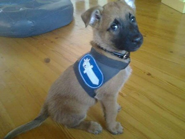 Puppy Joining Finish Police