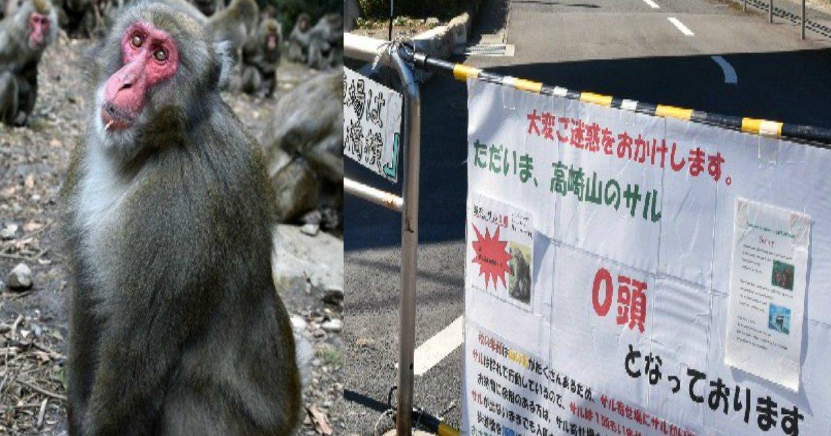 saru.png?resize=1200,630 - サルが「ストライキ」!?エサが少ないと不満爆発でスネる