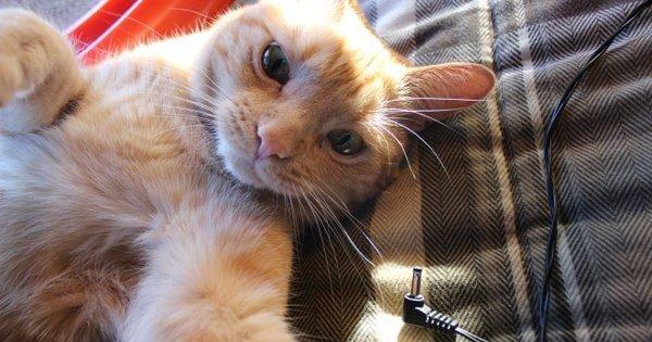selfie seize e1553234528997.jpg?resize=412,232 - 20 des selfies faits par des chats, oui c'est con mais c'est pour ça que tu vas regarder