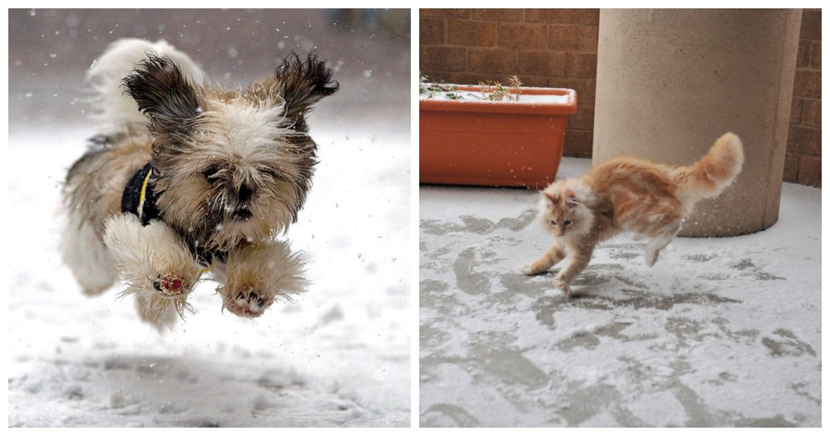 snow1.jpg?resize=1200,630 - 23 Adorable Animals Reacting to Snow for the First Time