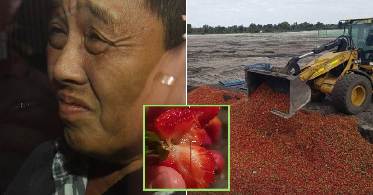 strawberries5.png?resize=412,232 - 50-Year-Old Woman Arrested For Strawberry Needle Contamination That Forced Farmers To Dump Their Fruits