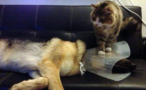 thu 2 e1543076376567.jpg?resize=1200,630 - 30 des preuves que les chats sont des branleurs (mais pourquoi sont-ils si méchants ?)