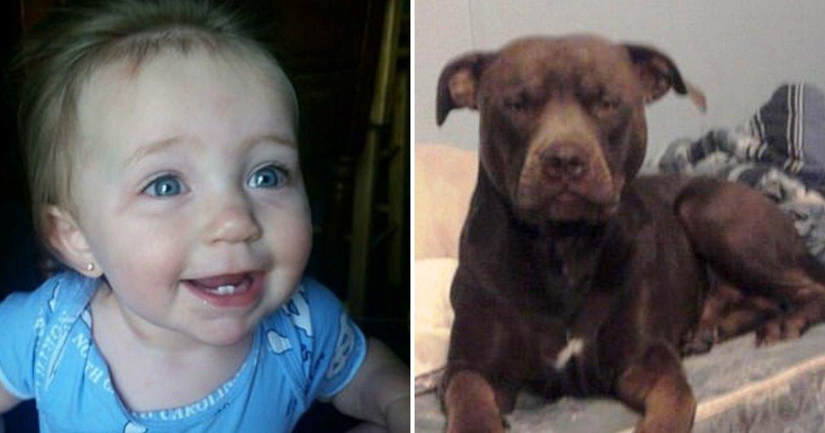 triniti6.jpg?resize=1200,630 - Un répartiteur du 911 demande à une mère de trancher la gorge du chien alors que son enfant se fait attaquer par leur pitbull