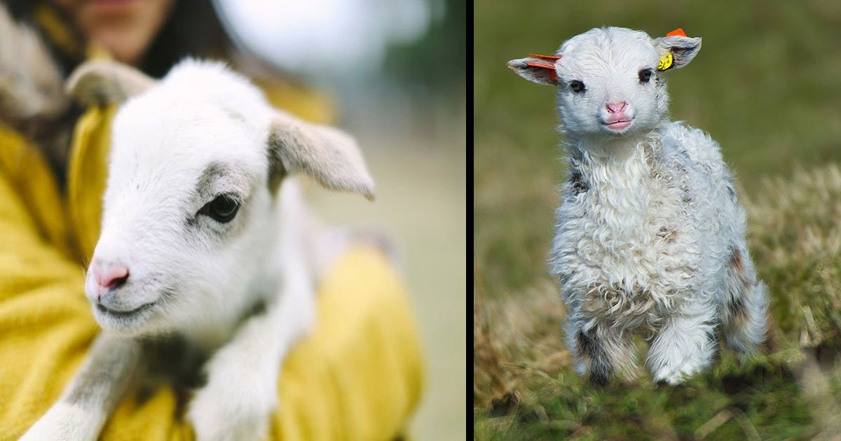 untitled 1 23.jpg?resize=412,232 - Baby Animals That Can Turn Your Gloomy Day Into A Brighter One