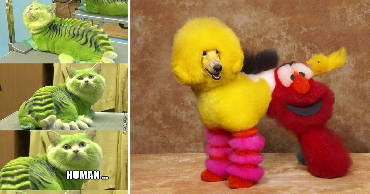 untitled 1 32.jpg?resize=1200,630 - 15 Times Pet Haircuts Went So Wrong It Made Everyone Laugh