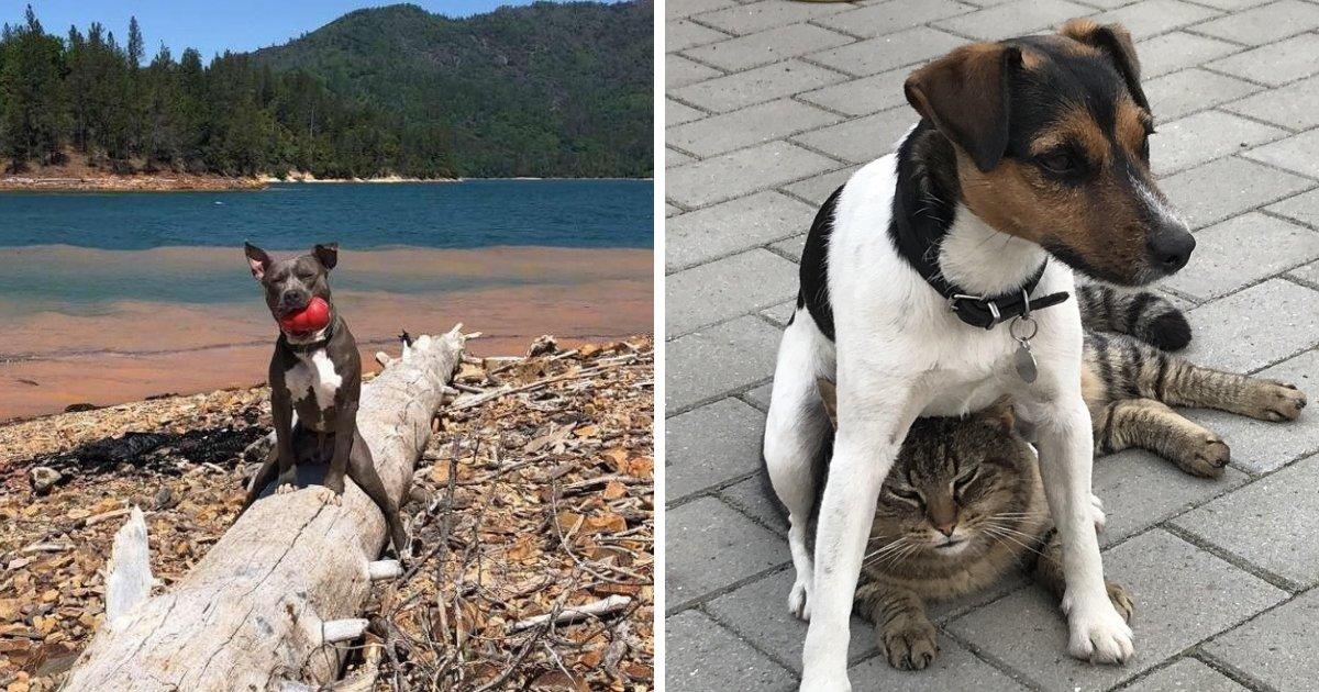 untitled design 71.png?resize=1200,630 - Ces photos de chien sont les meilleurs antidépresseurs et sont totalement gratuites!