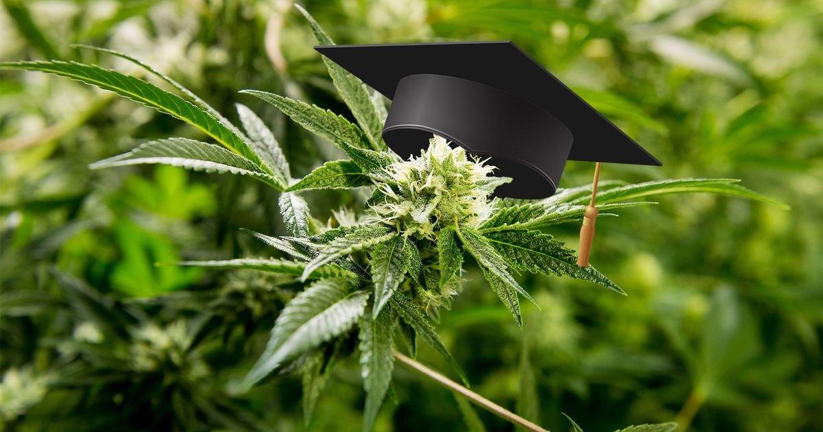 y1.jpg?resize=412,232 - Arrêter la consommation de cannabis peut vous aider à devenir un meilleur étudiant et à mieux vous souvenir des choses