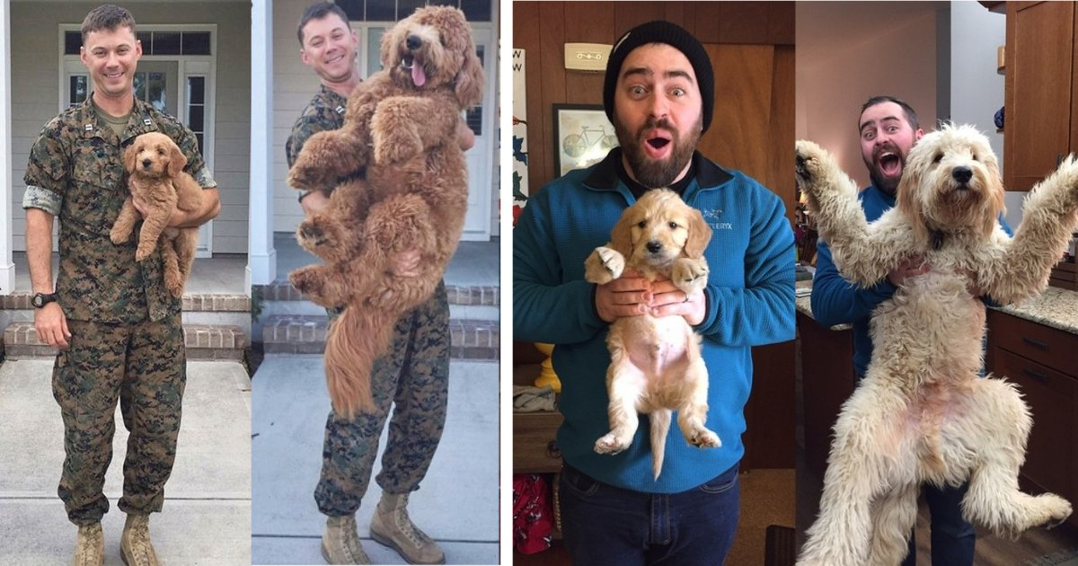 y6 18.png?resize=1200,630 - These 8 Adorable Pictures of Puppies Grown Up Into Dogs Will Make You Save All The Pictures in Your Phone