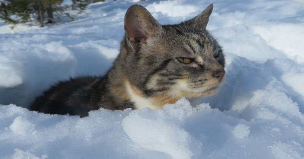 1 235.jpg?resize=1200,630 - 20+ Photos Proving That Cats and Snow Are Not Meant for Each Other