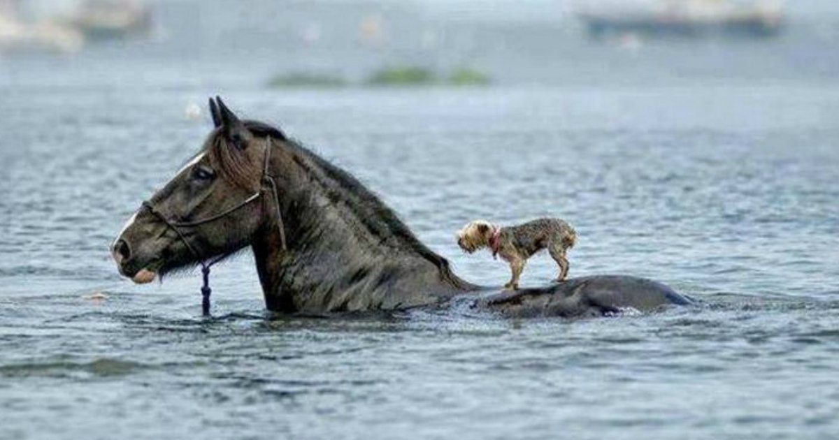 1 254.jpg?resize=412,232 - 20 Beautiful Photos Showcasing the Power of Unconditional Love in Animals