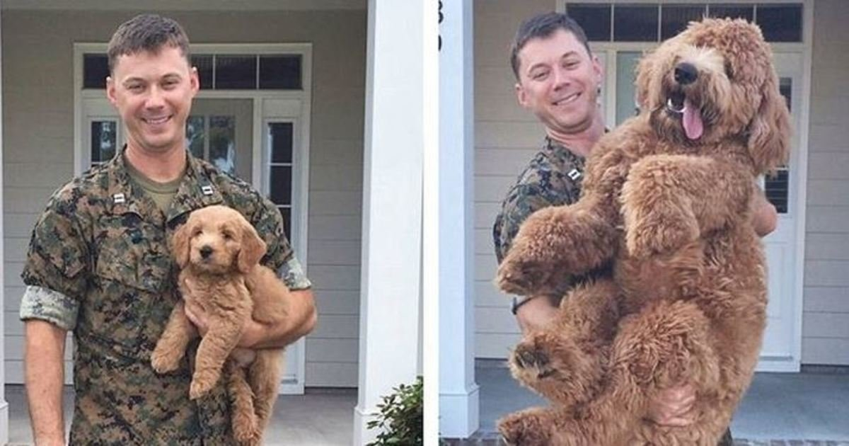 1 4.jpg?resize=1200,630 - 30+ Adorable Photos Proving That Puppies Grow Up Way Too Fast