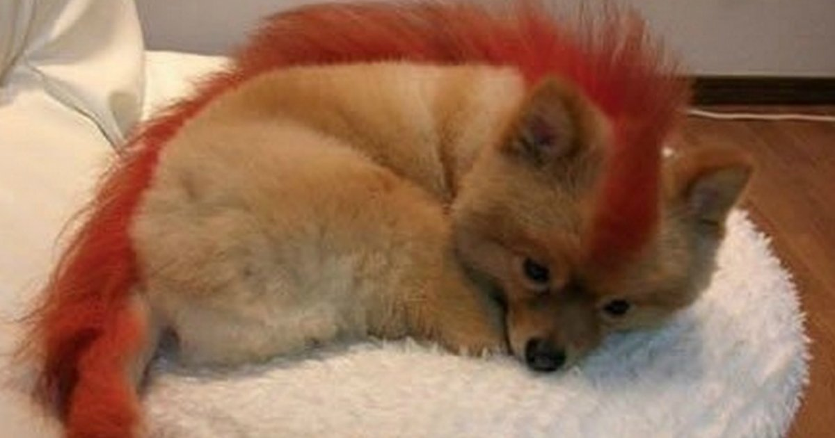 11 1.jpg?resize=1200,630 - Funniest Haircuts: Animals Who Are Not Happy With Their Haircuts…