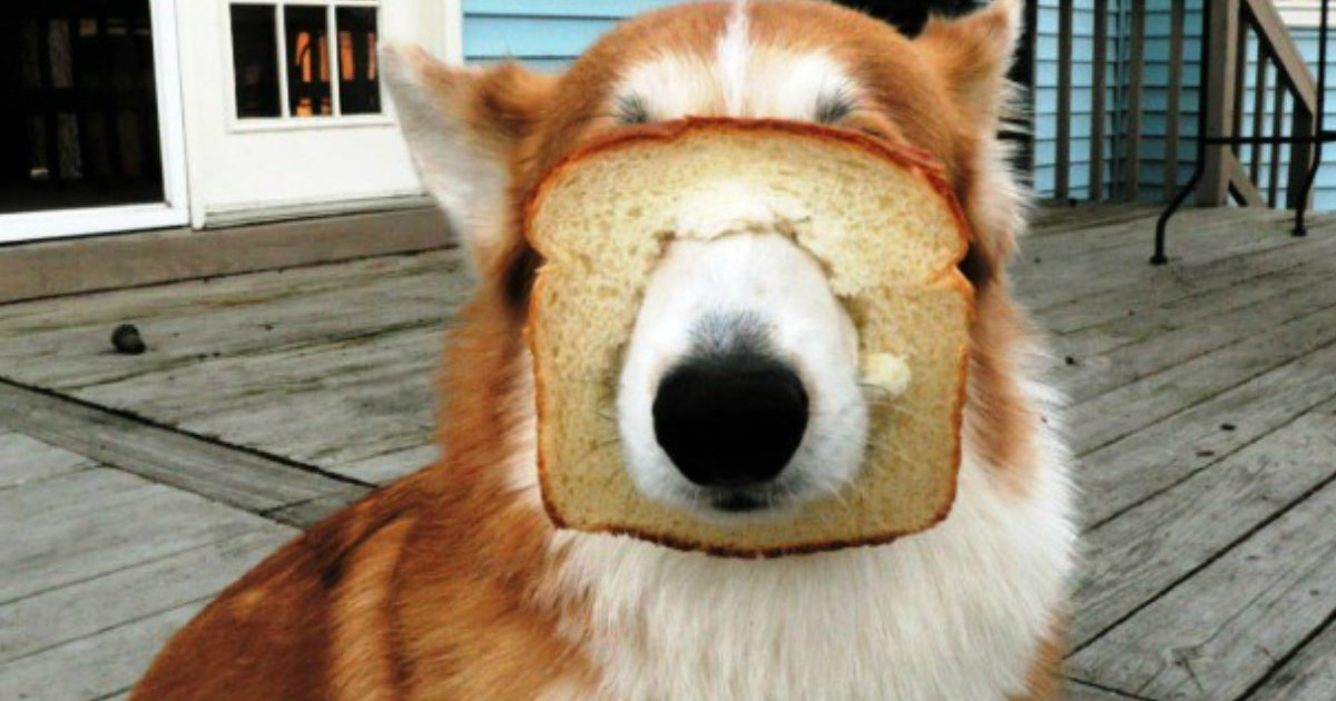 11 46.jpg?resize=1200,630 - 25 Animal Fails Too Cute To Not Laugh At