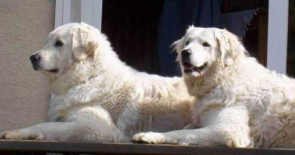13 15.jpg?resize=1200,630 - 20+ Rare Dog And Cat Breeds You Have to See to Believe!