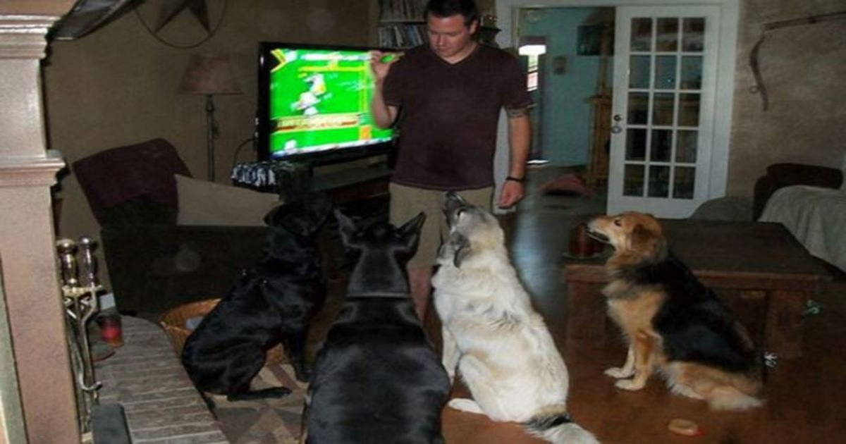 14 18.jpg?resize=636,358 - 35+ Hilarious Things Only Dog Owners Will Understand. I See #5 Every Single Day!