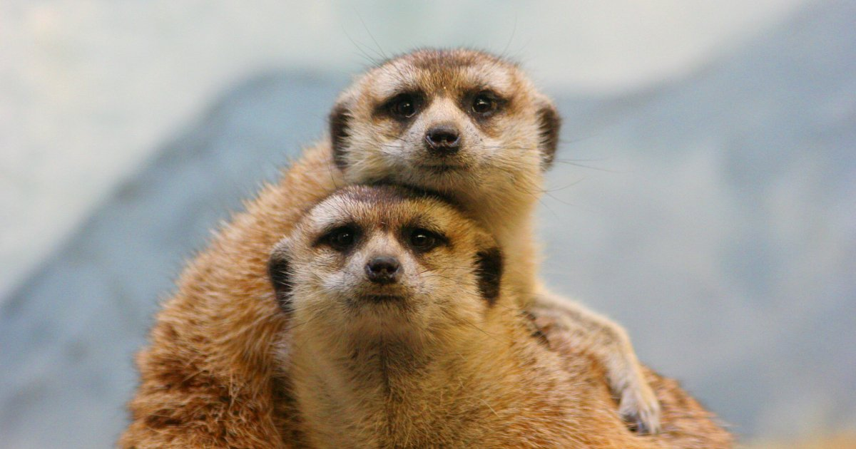 15 3.jpg?resize=636,358 - 30+ Animal Couples That Prove Love Does Exist