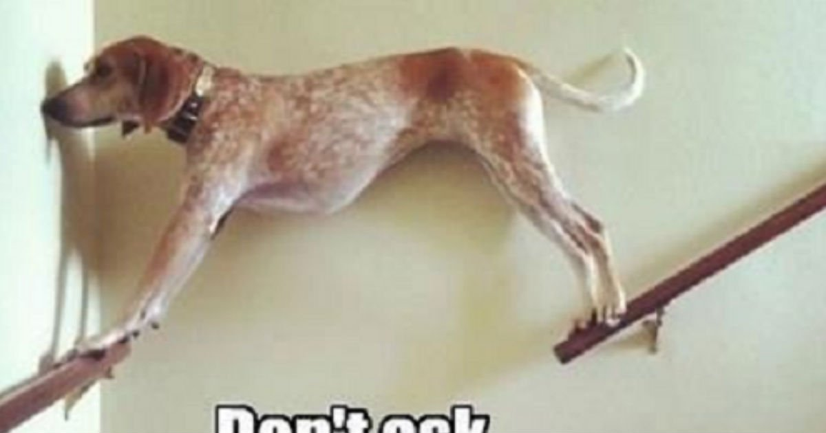 15 31.jpg?resize=412,232 - 50 Dog Memes That Will Make Your Day