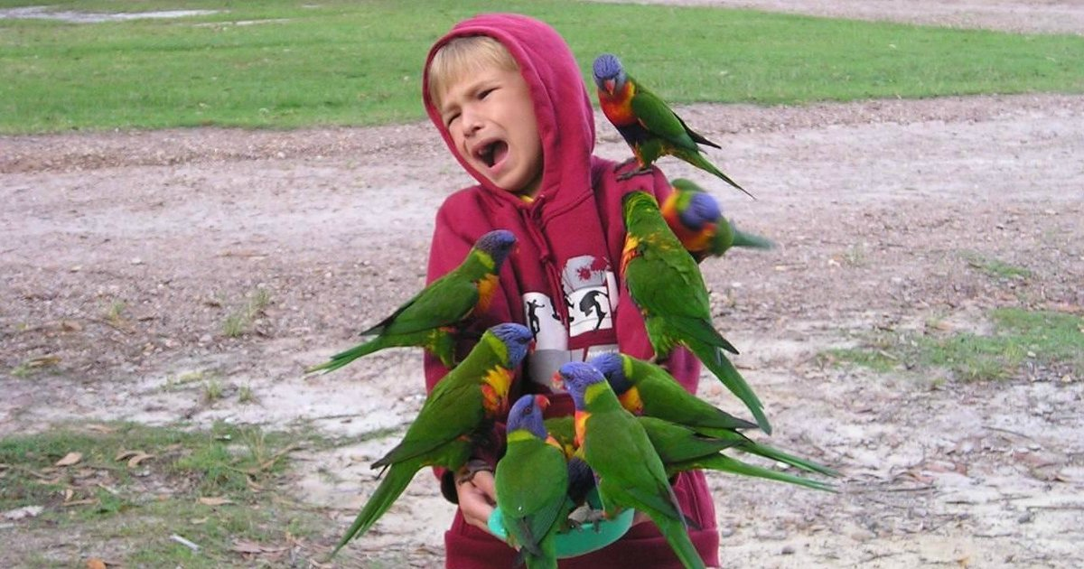 2 2.jpg?resize=1200,630 - 30 Funny Photos Of Birds Being Total Jerks, #9 Is Hilariously Rude.
