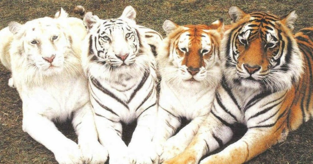 2 93.jpg?resize=412,232 - 25+ Animals That Stunned Us With Their Coloring And Beauty