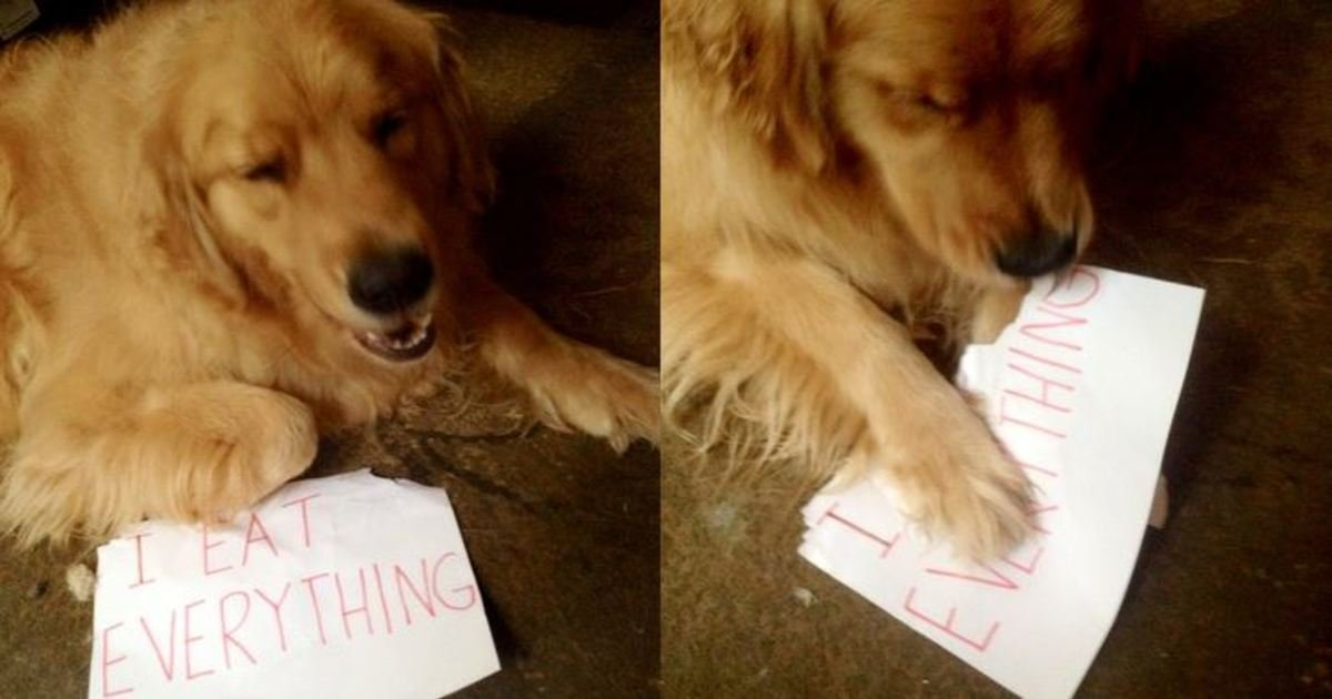 20 1.jpg?resize=412,232 - 25+ Photos Showing How Naughty Cats and Dogs Confess Their Crimes