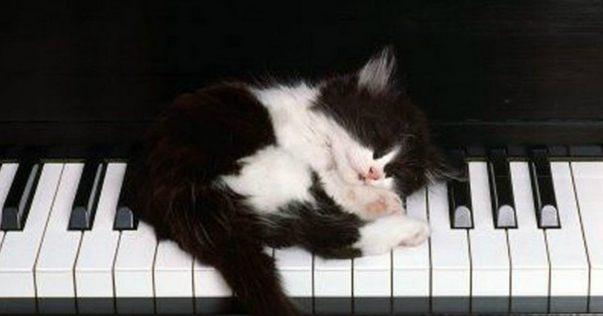25.jpg?resize=412,232 - 30+ Pets Asleep in a State of Bliss in the Most Interesting Places