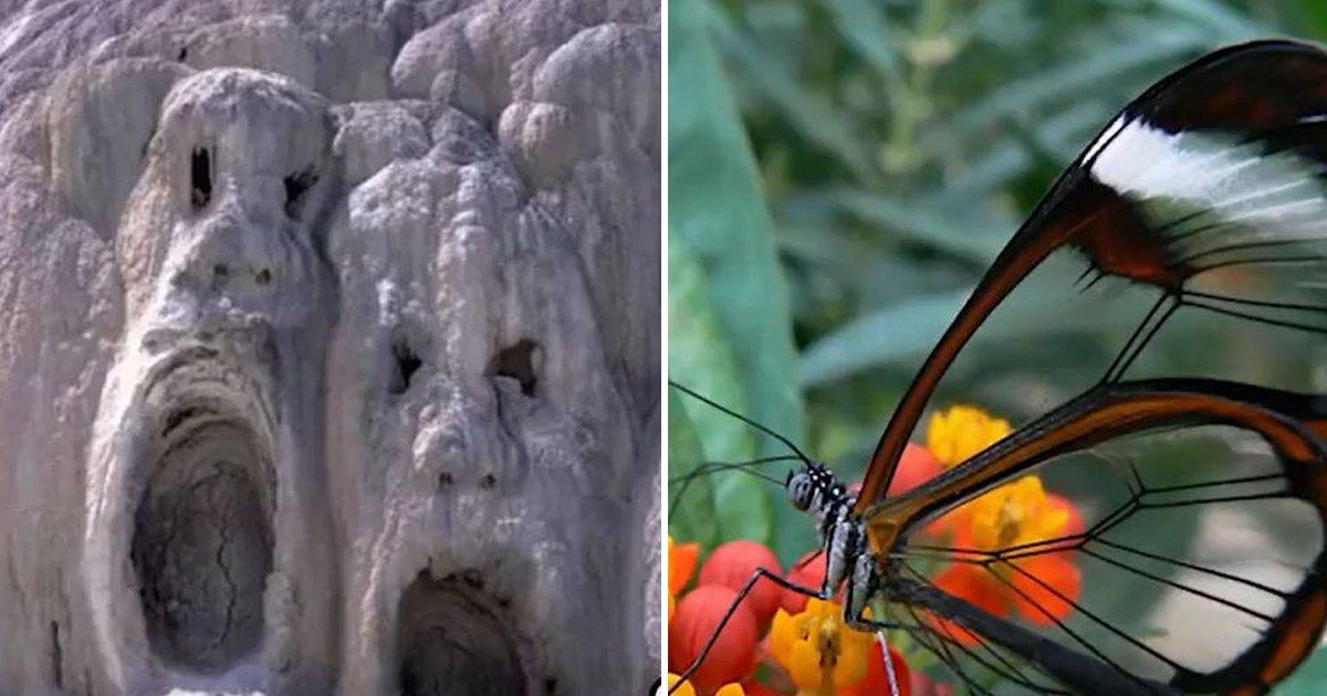 3 47.jpg?resize=412,232 - '자연'이 살아있다는 걸 보여주는 신비로운 사진들