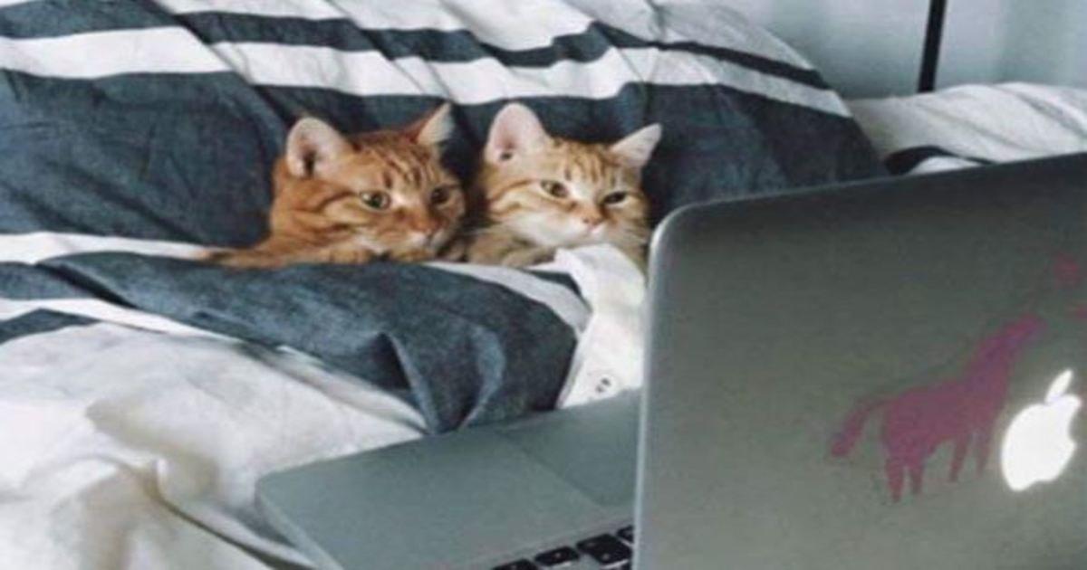 5 104.jpg?resize=1200,630 - 19 Super Relatable Cat Memes