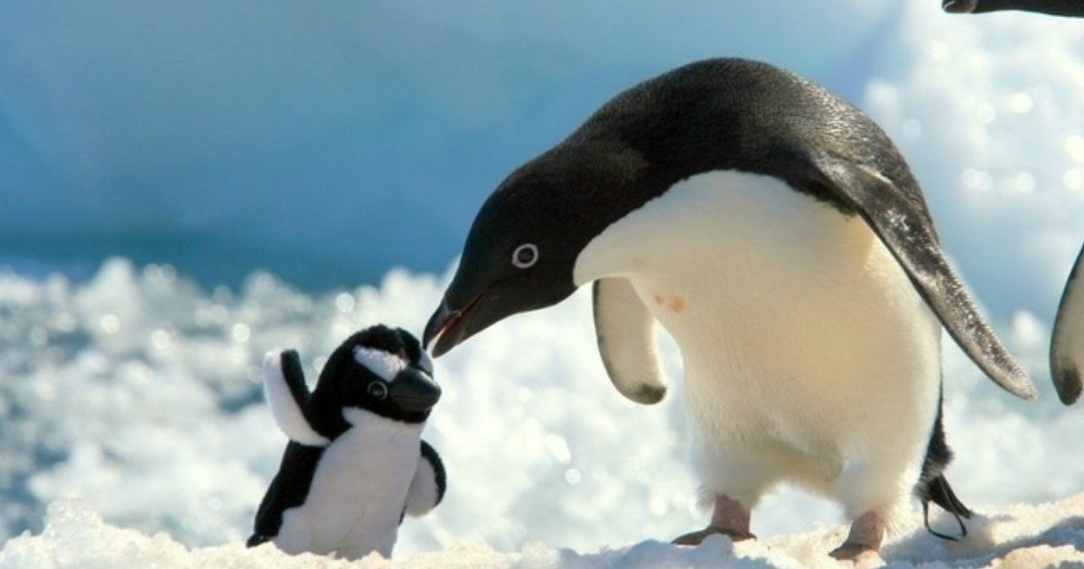 5 4.jpg?resize=636,358 - 25+ Adorable Animals Posing With Their Stuffed Friends