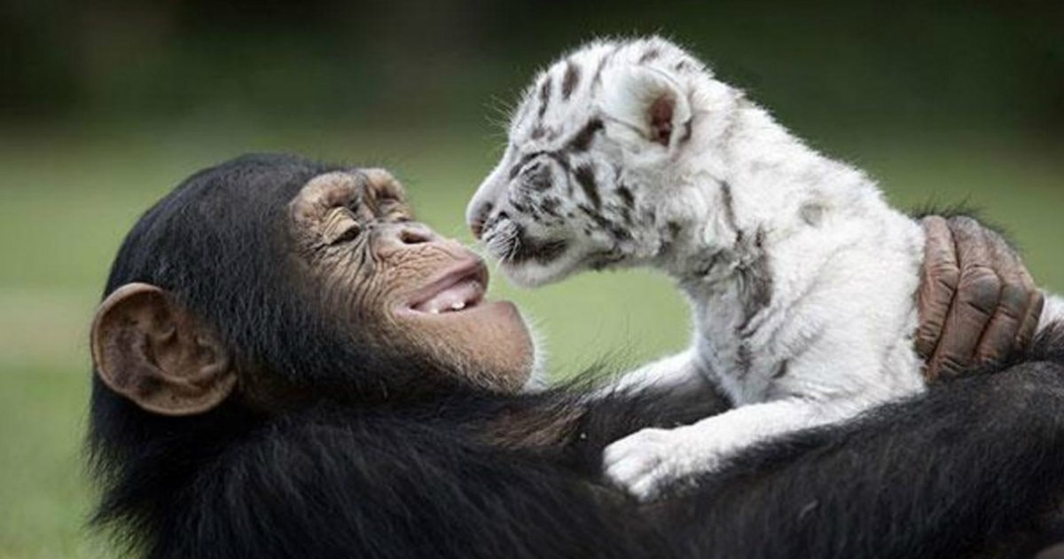6 1.jpg?resize=1200,630 - 15 Unlikely Animal Friendships That Will Melt Your Heart