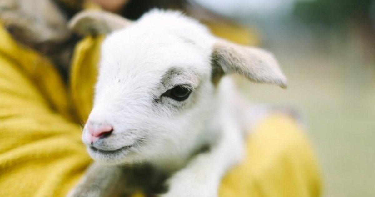 7.jpg?resize=1200,630 - 21 Baby Animals That Can Save Your Gloomy Day