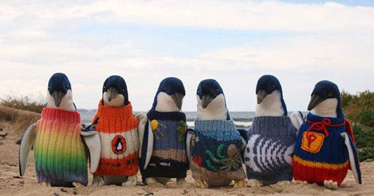8 4.jpg?resize=412,232 - 22 Adorable Animals Wearing Miniature Sweaters Ready for Winter Time