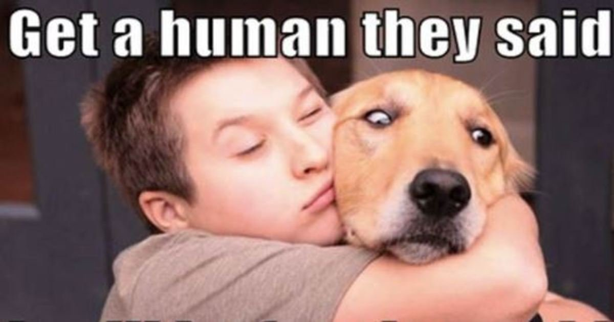 9 45.jpg?resize=412,232 - 50 Hilarious Dog Memes That Will Brighten Up Your Day