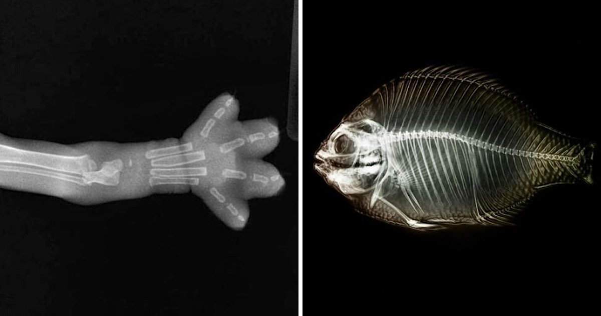 9 55.jpg?resize=412,232 - 놀랍고 귀여운 동물들의 X-ray 사진, TOP7