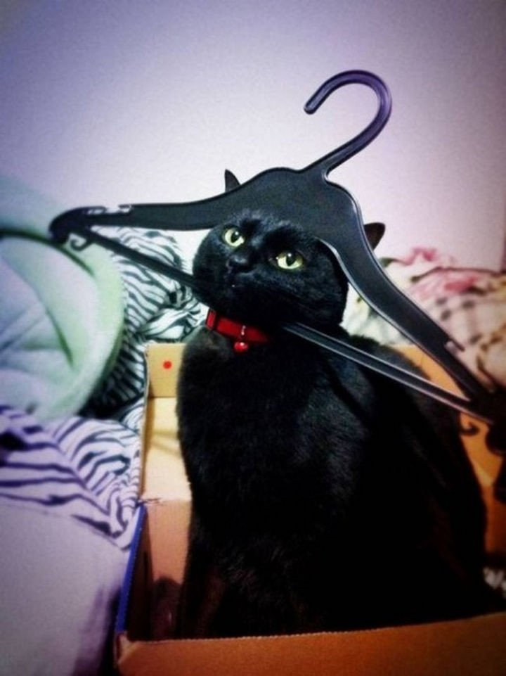 """15 Hilariously Curious Cats - """"I am Sir Mittens, if you post this on Facebook, you will pay!"""""""