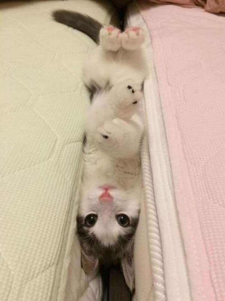 """15 Hilariously Curious Cats - """"Well, now I"""