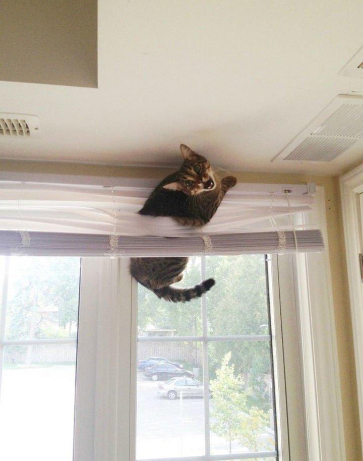 "15 Hilariously Curious Cats - ""Can"
