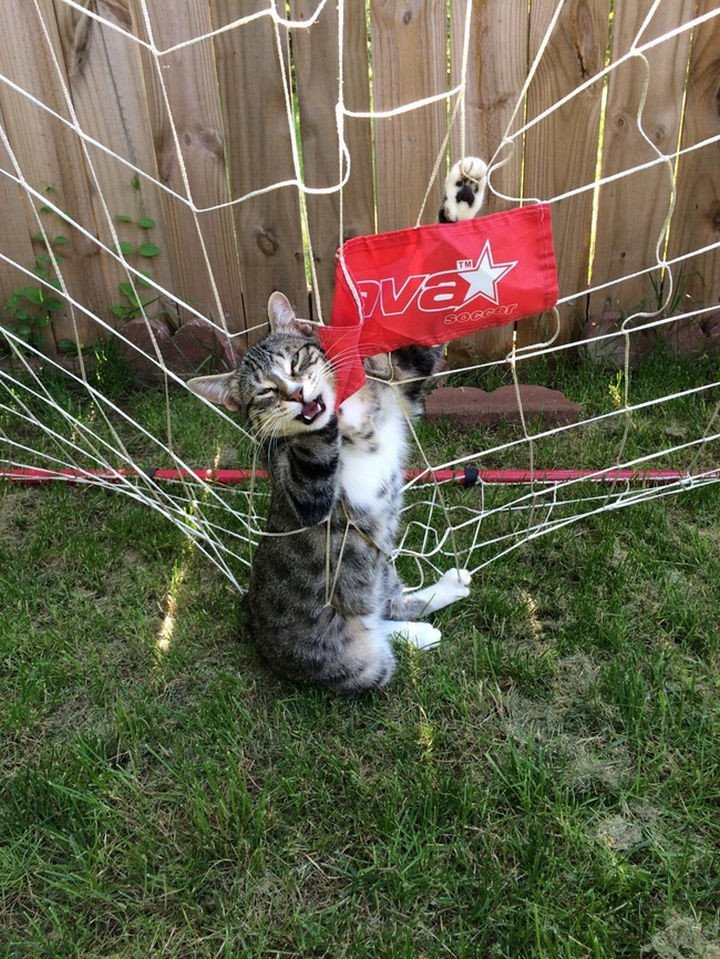 """15 Hilariously Curious Cats - """"It"""