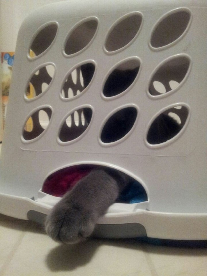 """15 Hilariously Curious Cats - """"Are the clothes in this laundry basket important to you. Yes? Then let me out!"""""""