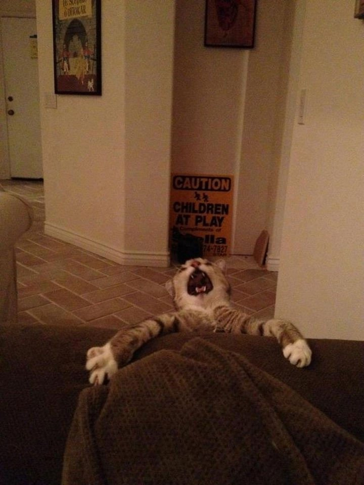 """15 Hilariously Curious Cats - """"I promise. I will never let go, Jack..."""""""
