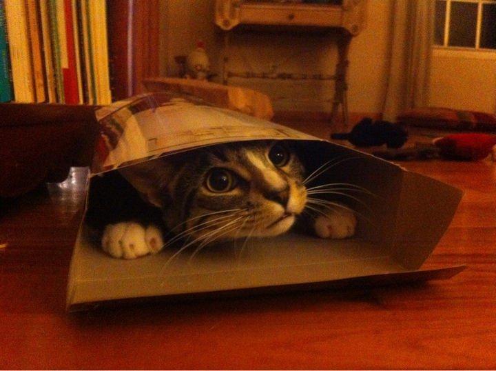 """15 Hilariously Curious Cats - """"I"""