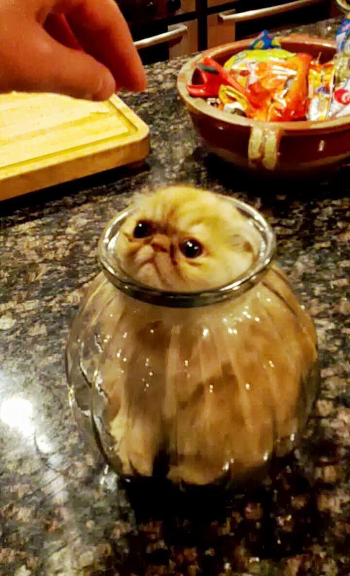 "15 Hilariously Curious Cats - ""You can"